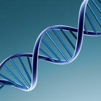 Maladies génétiques : individus atteints, porteurs sains et sains.