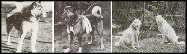 evolution-akita