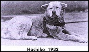 hachiko1932