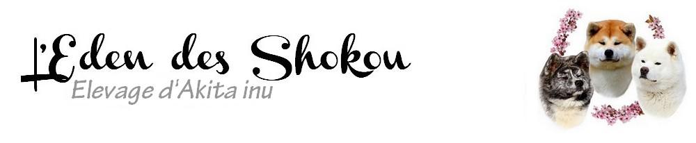 Elevage Akita inu – L'Eden des Shokou